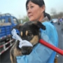 520 dogs intended for slaughter freed in China thanks to mic
